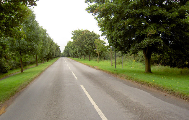Avenue of trees entering Lound.