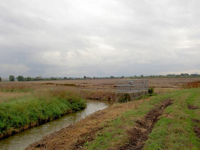 Drainage dike and devastated crop behind.