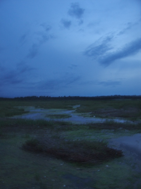 Reedland Marshes at dusk