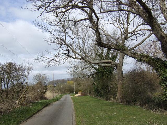 Beech trees at Beckett End