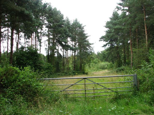Track through Old John's Wood