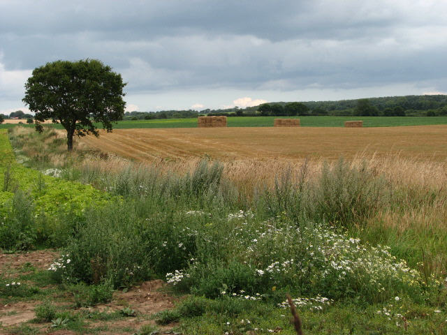 View across fields to Old John's Wood