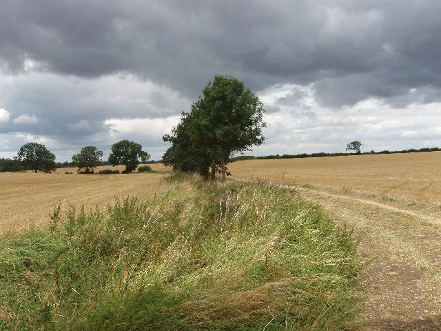 Oak and ash trees near Hinwick Lodge Farm