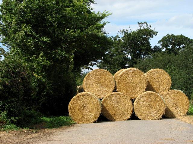 Straw bales near Tavistock Farm