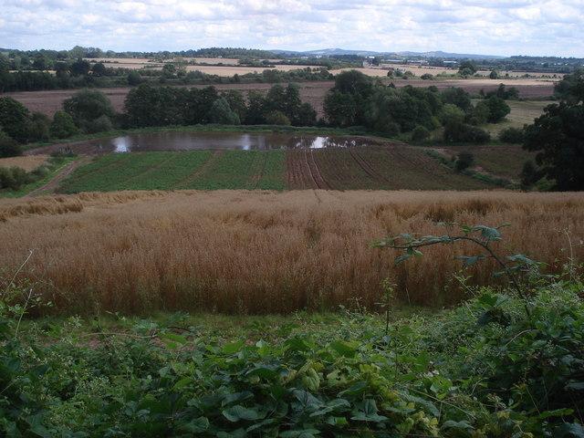 Flooded crops below Queenswood