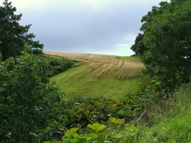 Field Craigmill Den, Panbride