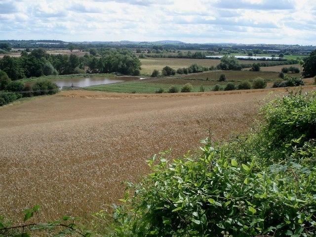 Oat crop near Queenswood