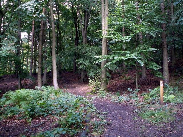 A Footpath in Heatherdene Wood