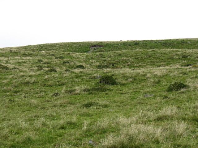 Rough grazing on the hillside