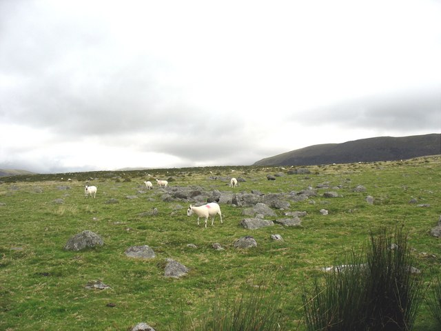Sheep grazing amidst pre-historic remains
