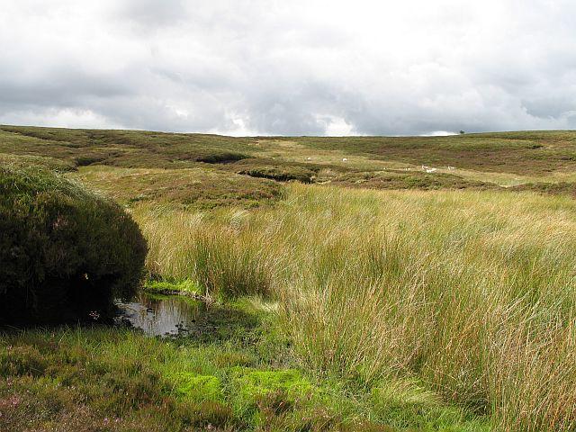 Caddon Head
