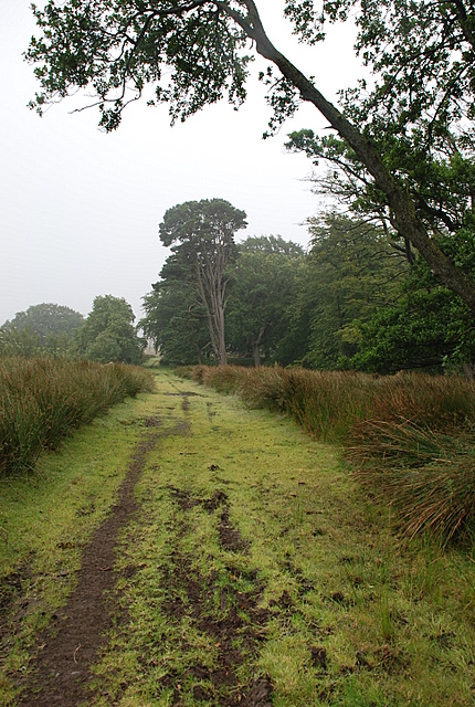 Bridleway along the edge of the wood