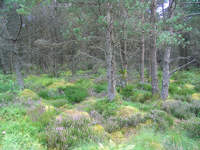 Forestry at Charlie's Knowe