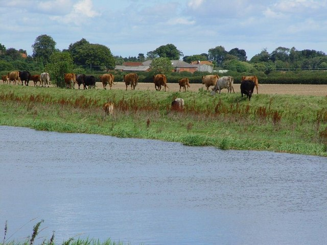 Pasture (with cows) on the eastern bank of the River Hull.