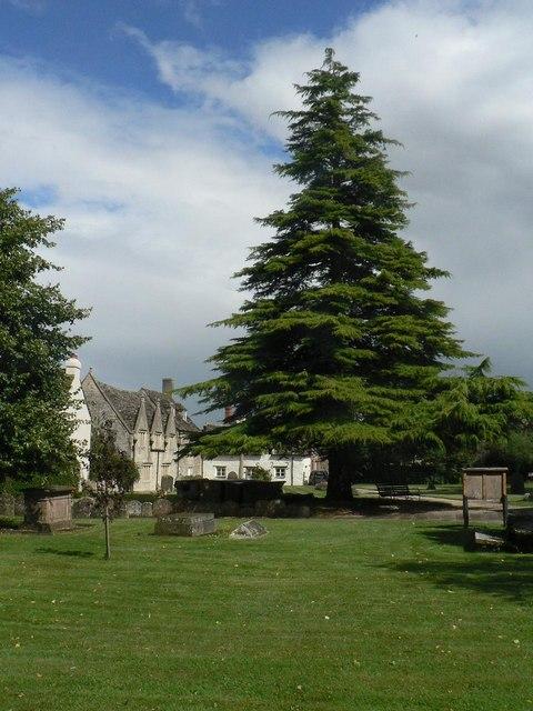 Cricklade: churchyard tree