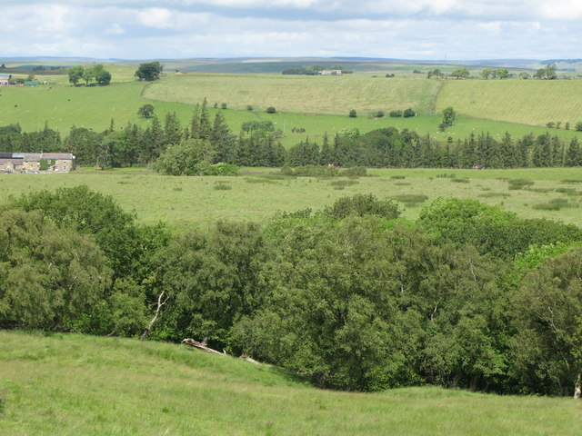 Pastures and woodland south of Longlee Farm