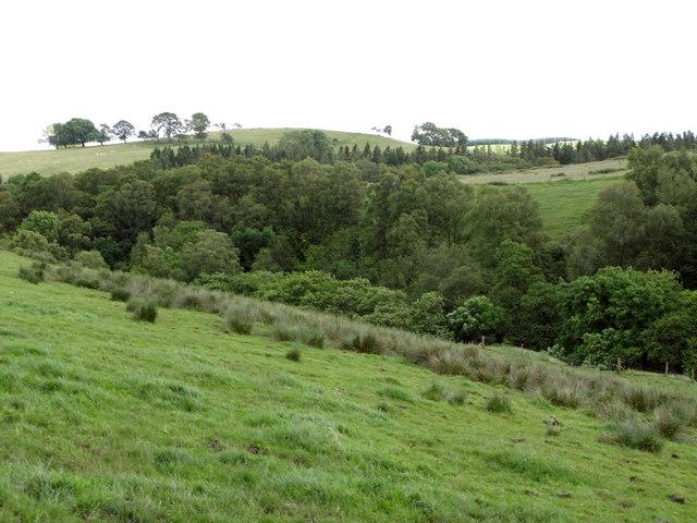 Pastures and woodland near Longlee Farm