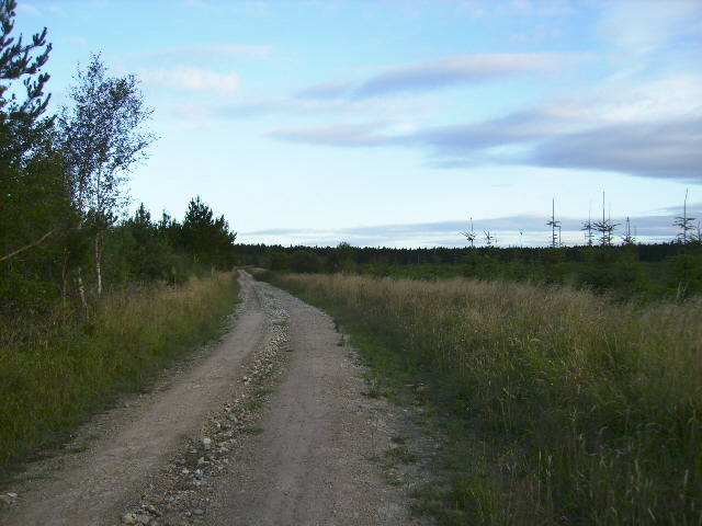 Track in Langdale Forest