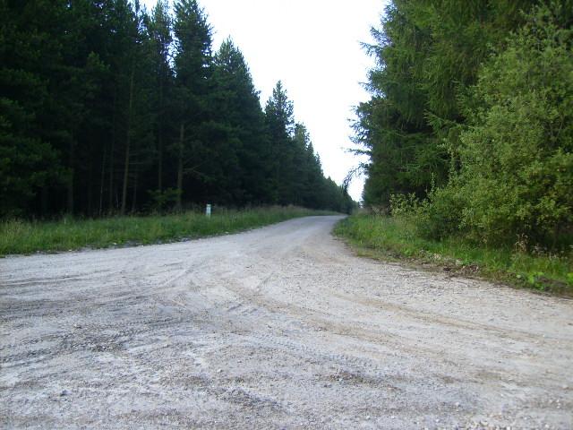 Track junction at Brecken Howe in Langdale Forest