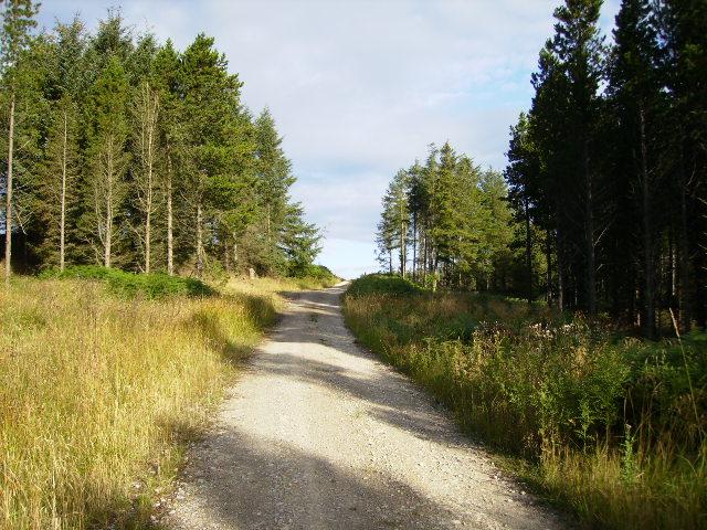 Forestry track at Barley Carr Tongue
