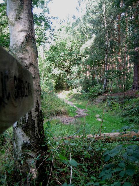 Bridleway in Swannington Bottom Plantation