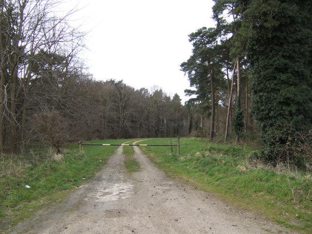 Track into Sugarhill Plantation