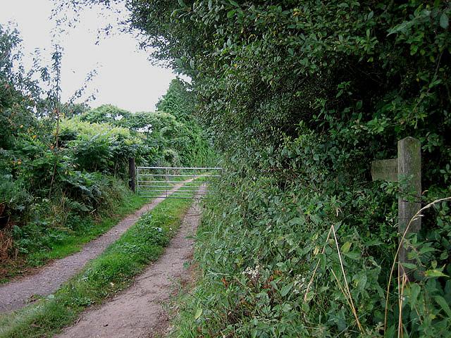Walking south to Attlebridge
