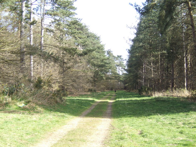 Byway through the forest
