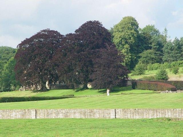 Copper Beech Trees, Kirkham