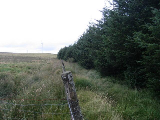 Fforest Conifferaidd / Coniferous Forest