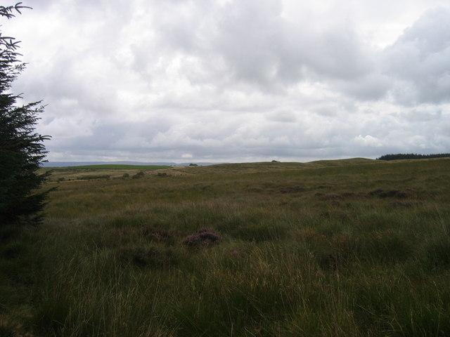 Cors Fynydd / Upland Bog
