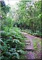 SJ9150 : Footpath in Bagnall Woods by Debbie Turner