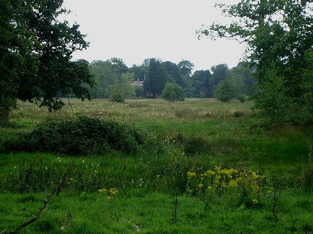Watermeadows in Twyford Hall Park