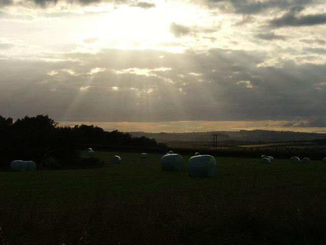 Harvest at Primrose Hill Farm