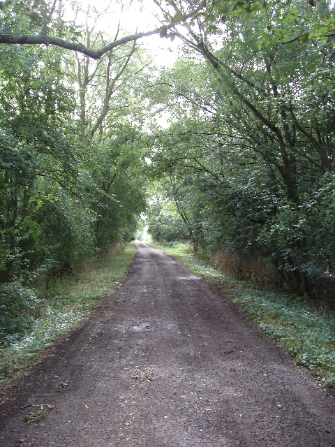 Road by Bearshank Wood