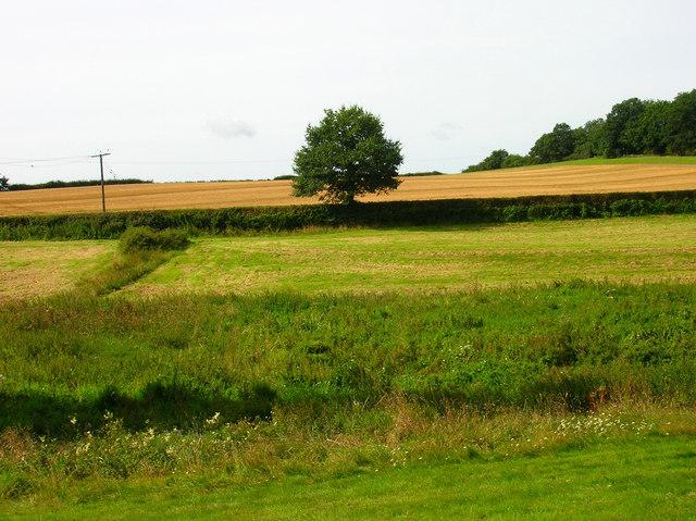 Marshy Ground near Coombelands