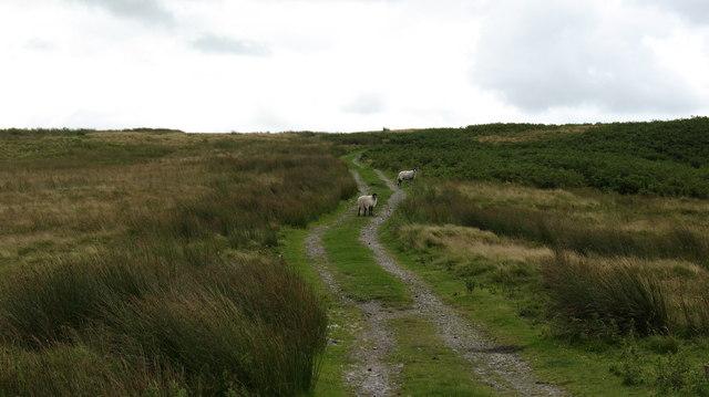 Moorland Track on Barningham Moor