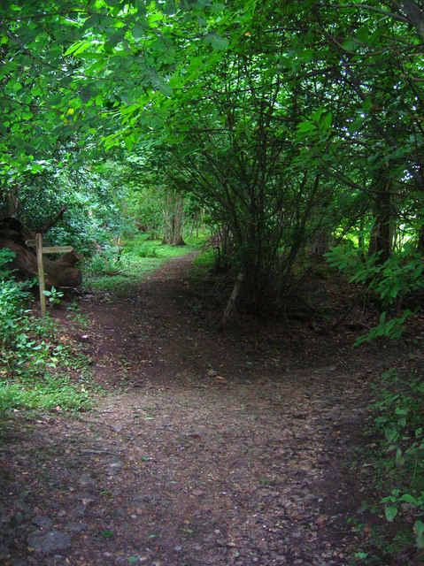 Bridleway and Footpath Junction, Walters Plantation