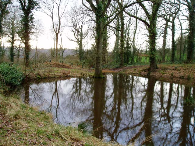 Small woodland pond in Cockshoot Wood