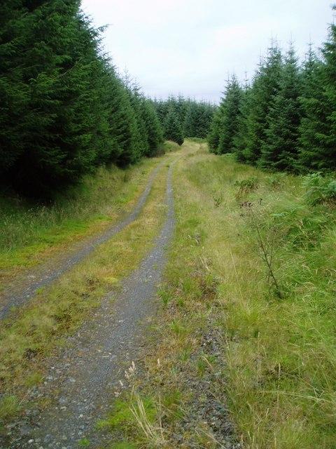 Forest Track, Glenshimmeroch Forest.