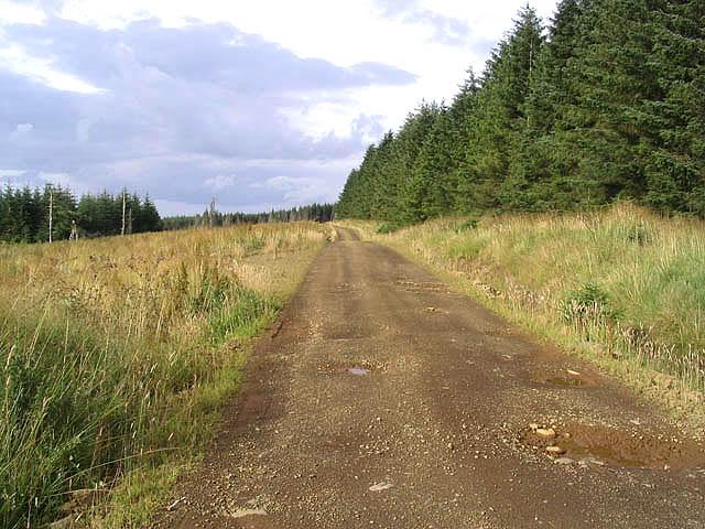 Forestry road at Butter Bog