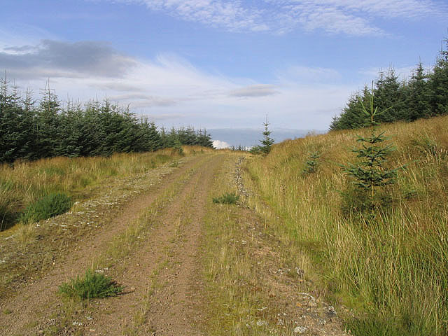Forestry road in Letham Plantation