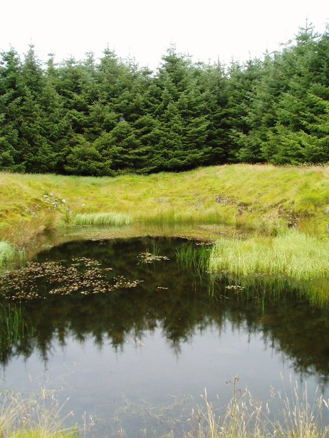 Pond Reflections, Glenshimmeroch Forest.