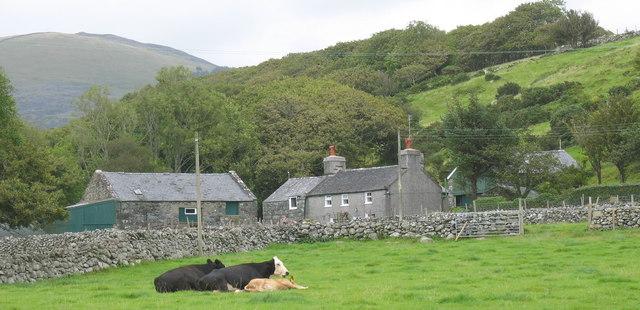 Fferm Tyddyn y Felin Farm