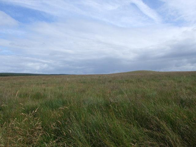 Calf Hill