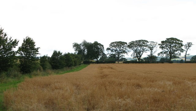 Arable land near Leazes Head