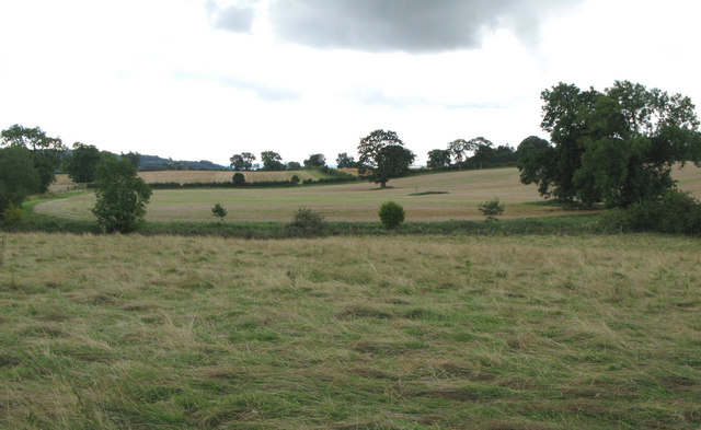 Arable land near Leazes Head (2)