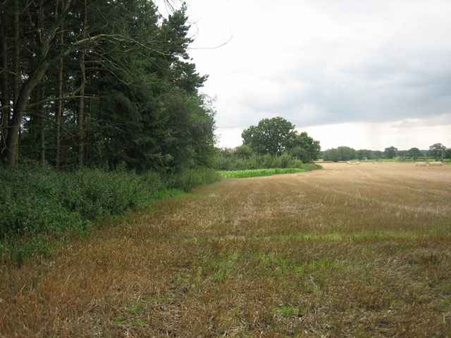 Mixture of crops in field south of Thurning