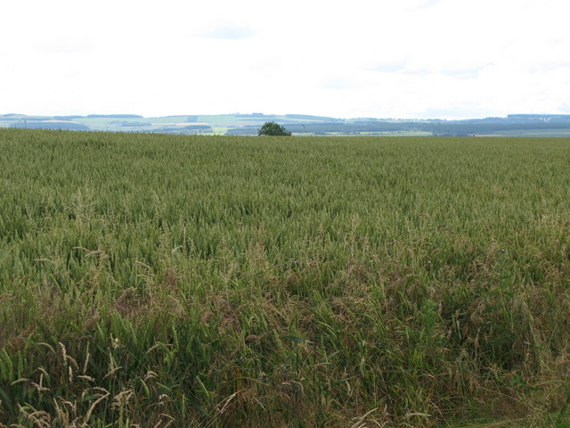 Arable land near Thornbrough