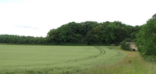 Arable land near the Thornbrough Lime Kiln